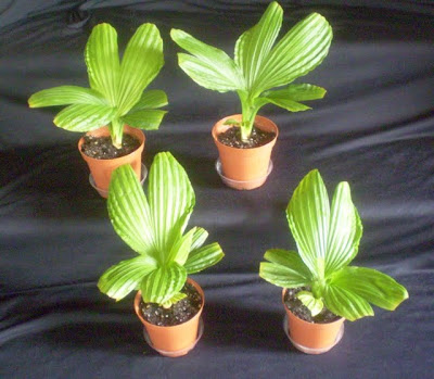 Plants are the strangest people fun with exotic angel tags for How to take care of exotic angel plants