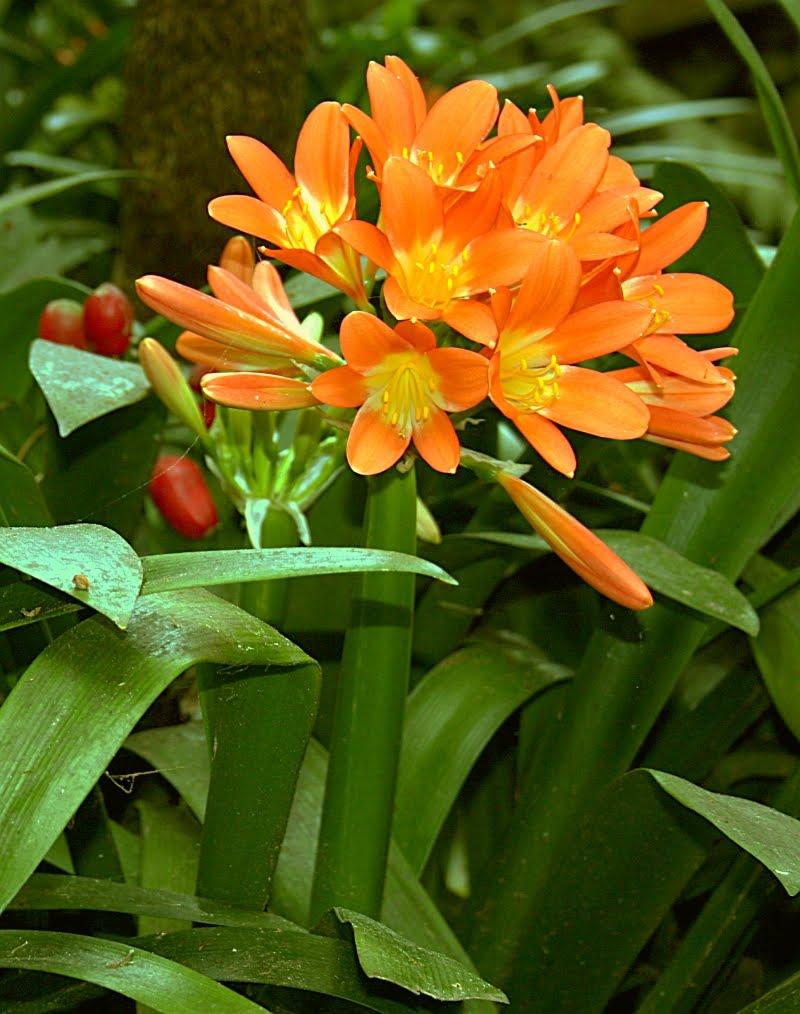 Plants are the strangest people list houseplants which - Flores de sombra ...