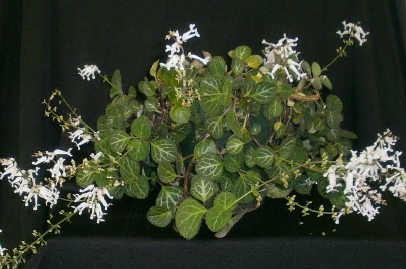 Горшечные растения и цветы купить оптом