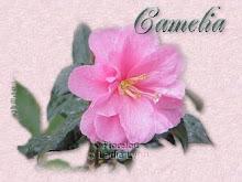 Le nom camelia - Camelia prenom ...
