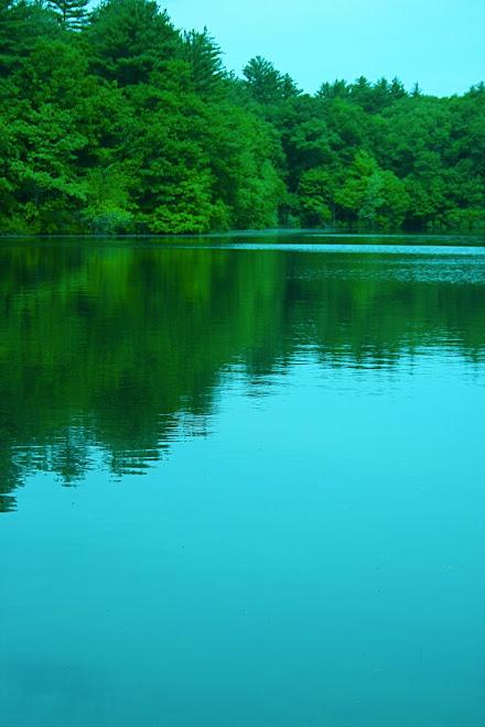 Walden Pond Serenity