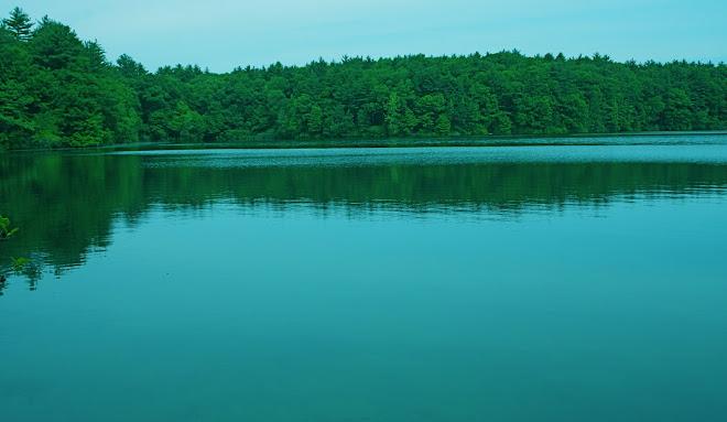 Walden Pond Morn