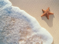 " Lo decisivo para traer la paz al mundo es Nuestra conducta diaria" ~ Krishnamurti ~