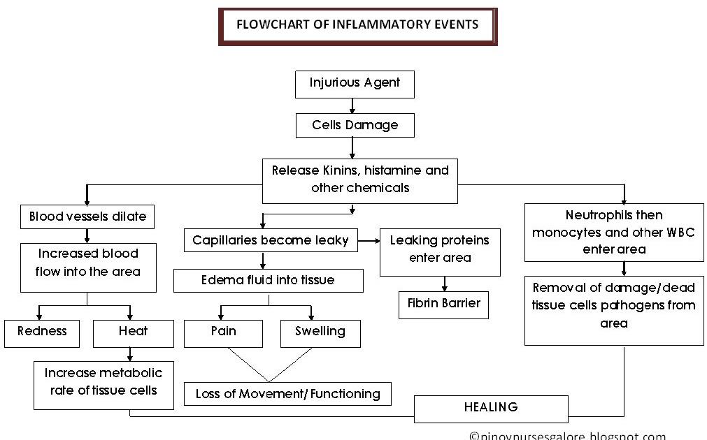 flowchart of inflammatory events   pinoy nurses galore