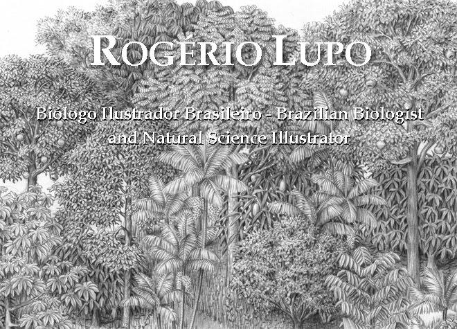 Rogério Lupo - Ilustrador Biológico Brasileiro