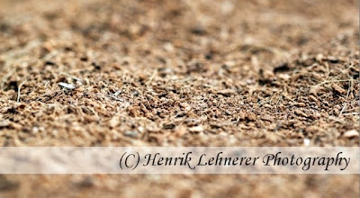 Scandinavian Stock Photo - Henrik Lehnerer - Mulch