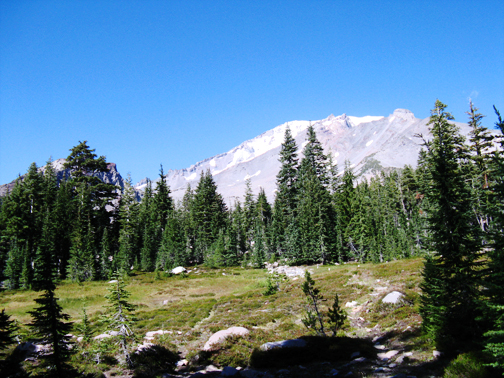 Mt Shasta and Panther Meadow
