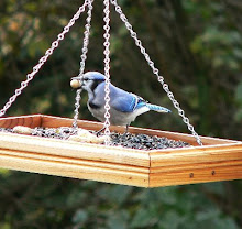 Blue Jay