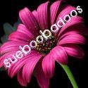 SueBooBadoos