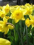 ...spring