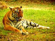Mysore Zoo Animals.