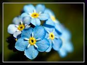 sevda çiçeği
