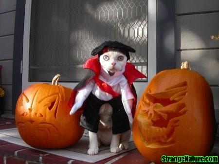 funny halloween. Funny Halloween Animal