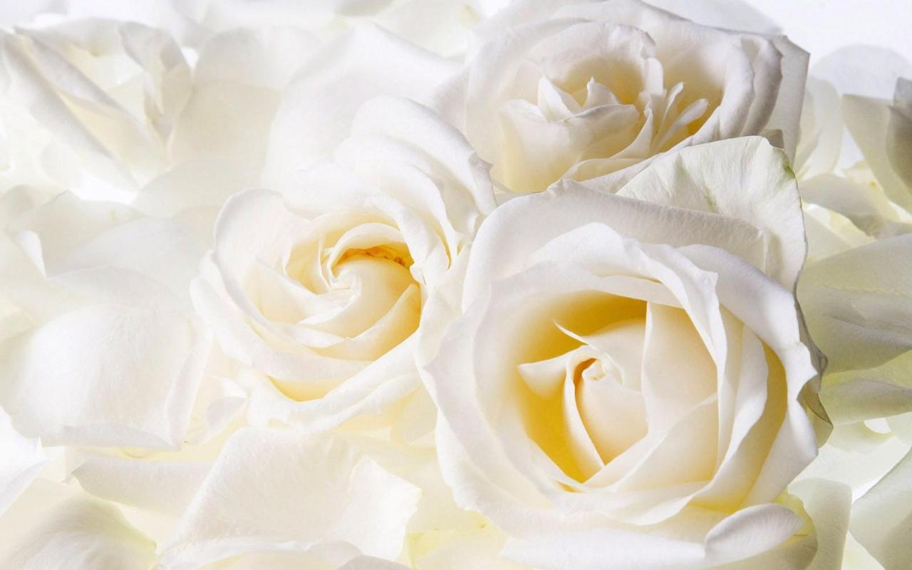 แจก wallpaper ดอกไม้ สวยงาม