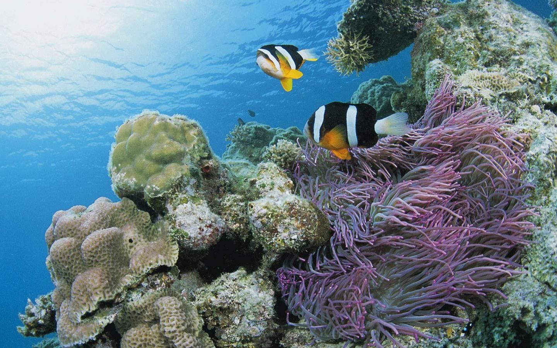 Fish underwater - photo#14