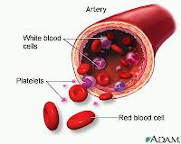 Platelet - Trombosit nedir?