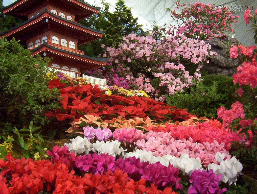 plantas jardim flores:Paisagens Com Flores