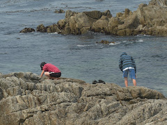 Playing on the rocky shores of Monteray Bay.