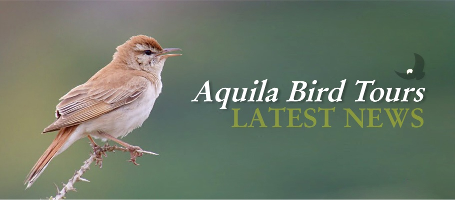 Aquila Bird Tours