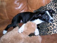 Mackenzie's Dog - Penelope