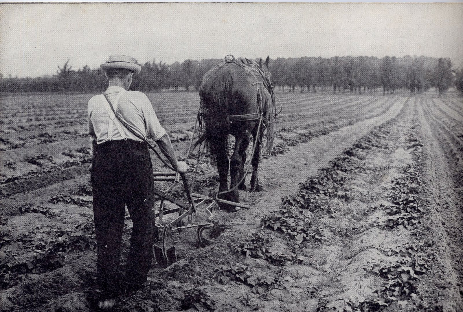 And all the way into 1945, that horse hoe was still being used by farmers, as this catalog picture shows: