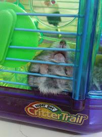 hammy shleep~