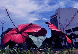 Bunga Merdekaku