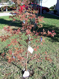 Jack's Tree:  Planted by friends in our yard