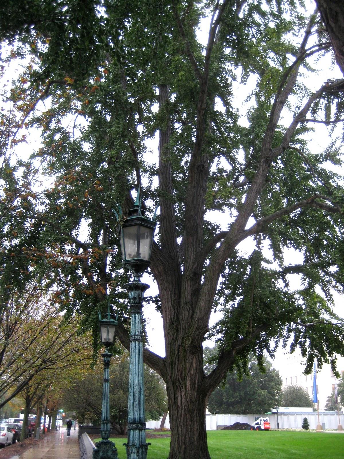 tree conservation essay