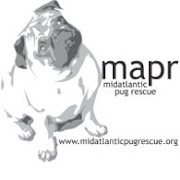 Mid-Atlantic Pug Rescue...