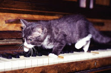 Piano Cat