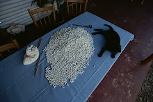 A black cat sits on a table of South Sea pearls of different colors