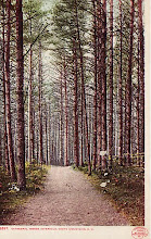 Postcard from Cathedral Woods NH
