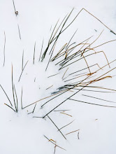 Dead grass peeking through snow