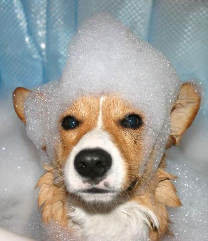 Funny Cute Dog Pictures