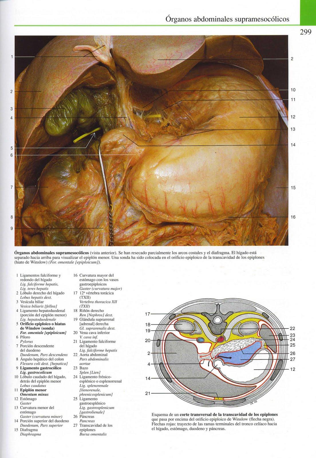 MariaJose: Atlas Fotografico de Anatomia del Cuerpo Humano.
