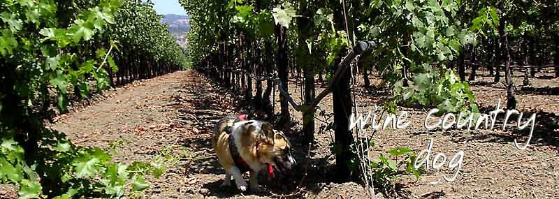 wine country dog ezine ™