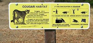 cougar non sequitur