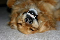 Golden's Upside-Down Smile