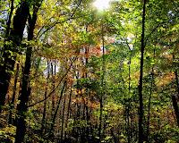 Sun Shining through Fall Leaves in Minnesota