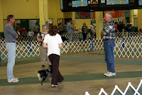 Tasha & Kiah (a Mini Australian Shepherd) Executing Obedience Pattern