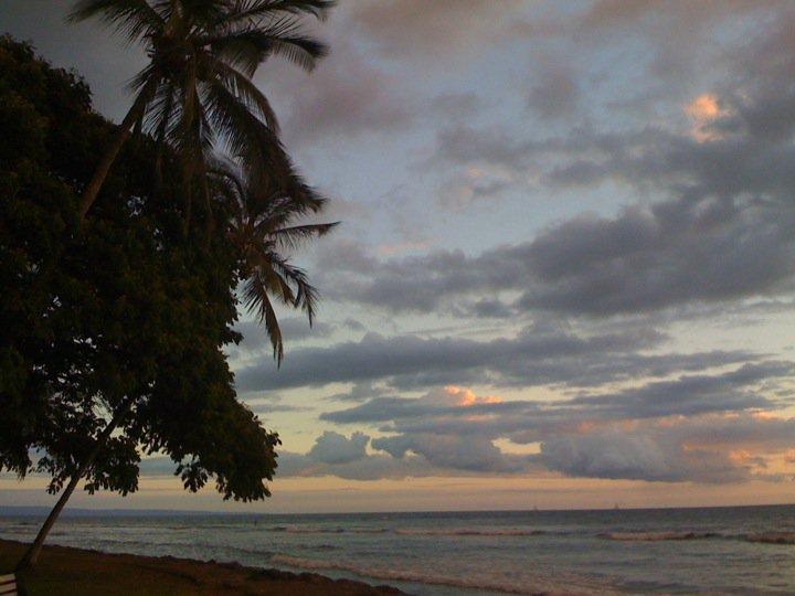 Maui 39 s blog by alexandra tonight at launiupoko beach park for Craigslist maui farm and garden