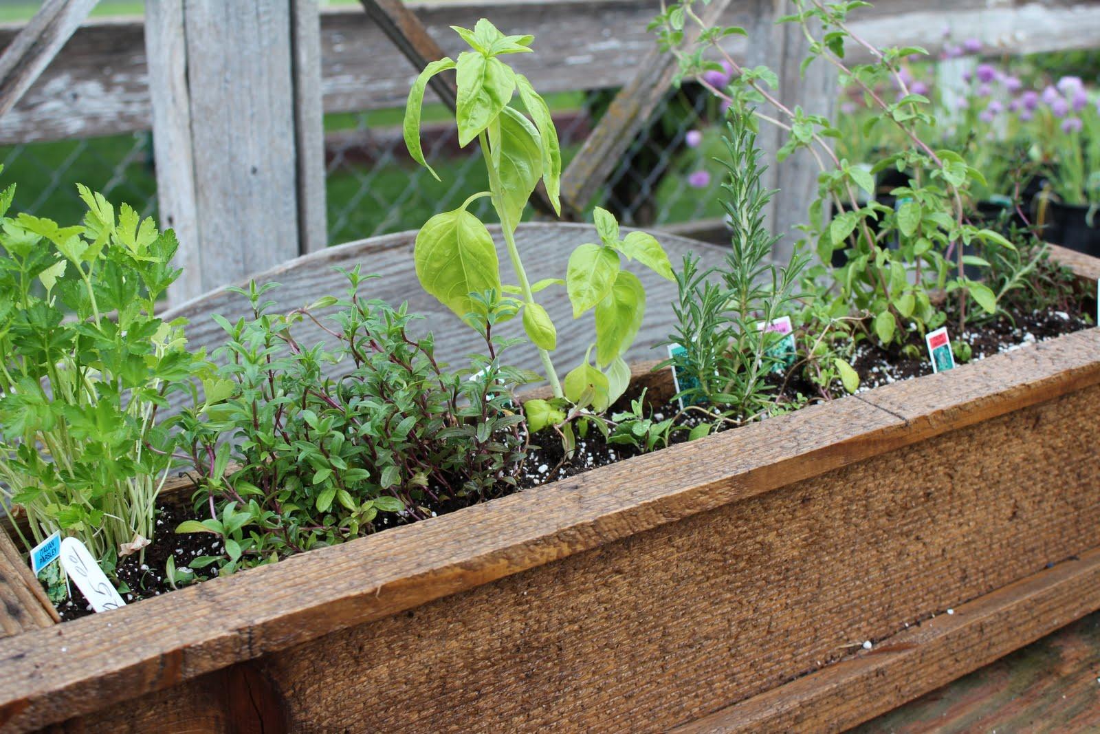 The Simpler Life At Perennial Gardens Patio Herb Garden