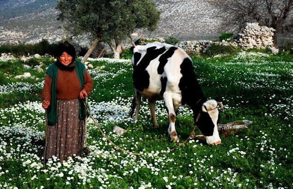 045- Fatma Nine ve ineği