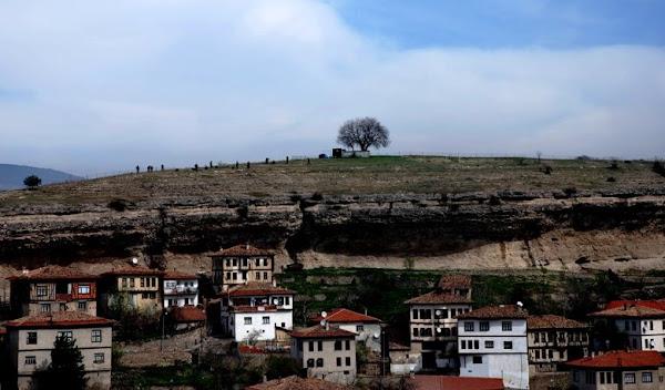 048- Safranbolu'da ağaç dikimi