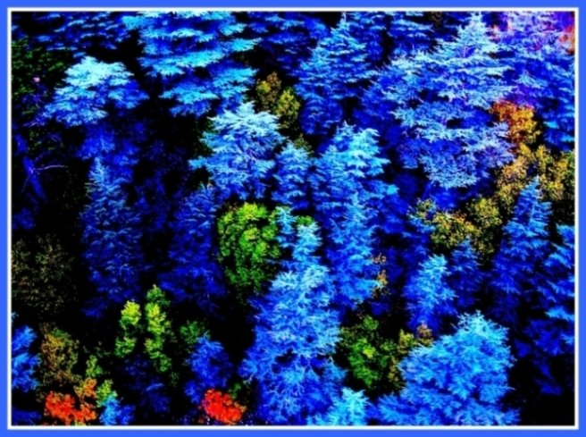082- Düşler Ormanı