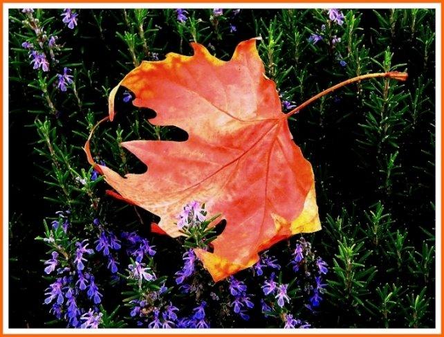 114- Sarı bir yaprak düştü yeşile...