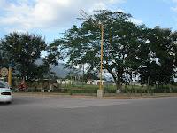 Jardin de plantas endemicas de Olanchito