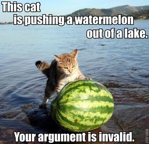 [Image: catwatermelonlake.jpg]