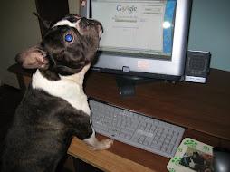 Buy Boston Terrier Stuff